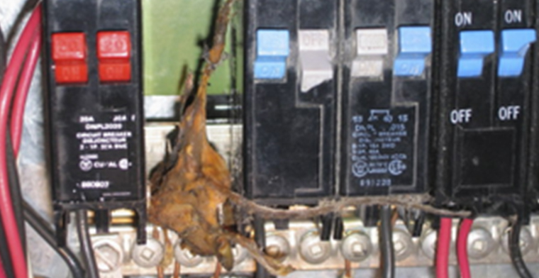 A Dead Mouse in a Breaker Panel